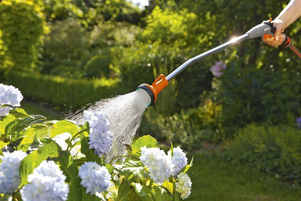 Golden tips for proper watering