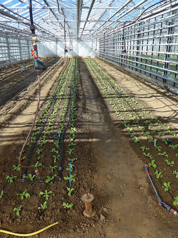 Efficient irrigation solutions