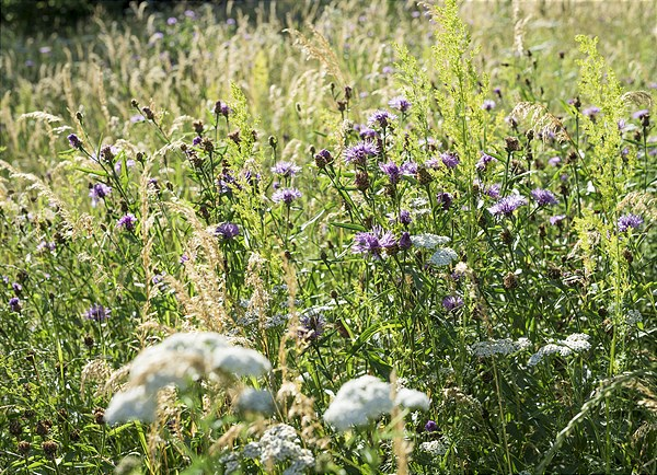 Creating a wild flower meadow properly